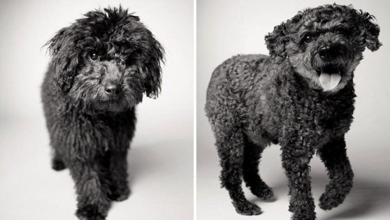 How dogs get older: A fascinating and deeply touching photography project.