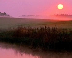 Early-morning-fog-pink-color-24582689-1440-900