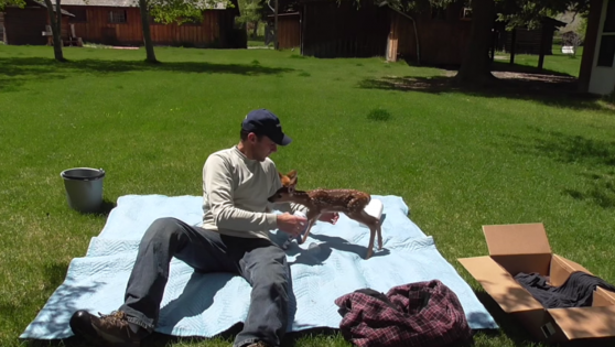 Baby Deer Refuses To Leave The Man Who Saved Her Life