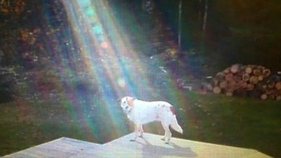 Look Closely At The Beam Of Light. It Went Viral For One INCREDIBLE Reason…