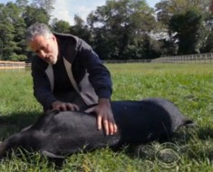 jon-stewart-farm.jpg.653x0_q80_crop-smart