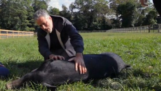 Jon Stewart Quits Comedy, Starts Animal Sanctuary to Rescue Abused Factory Farm Animals