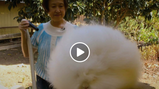 The fluffiest fluffy thing in the world